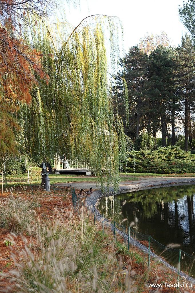 Дунайский парк в Нови-Саде