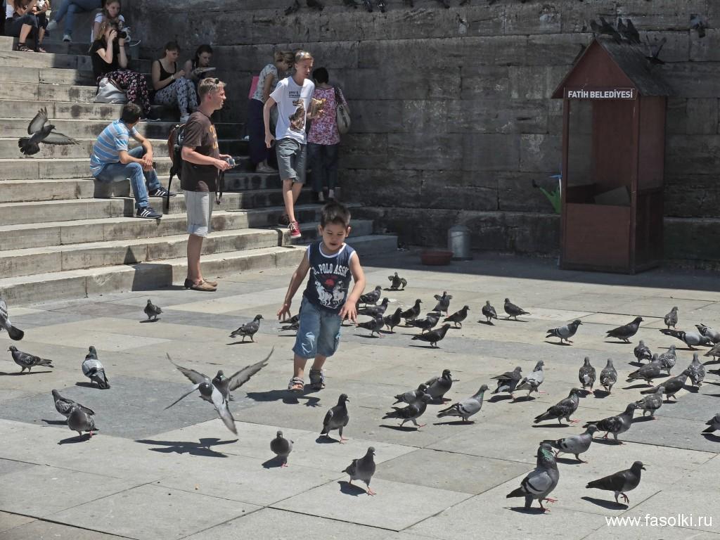 Если покормить голубей у Новой мечети, то ваше желание обязательно сбудется