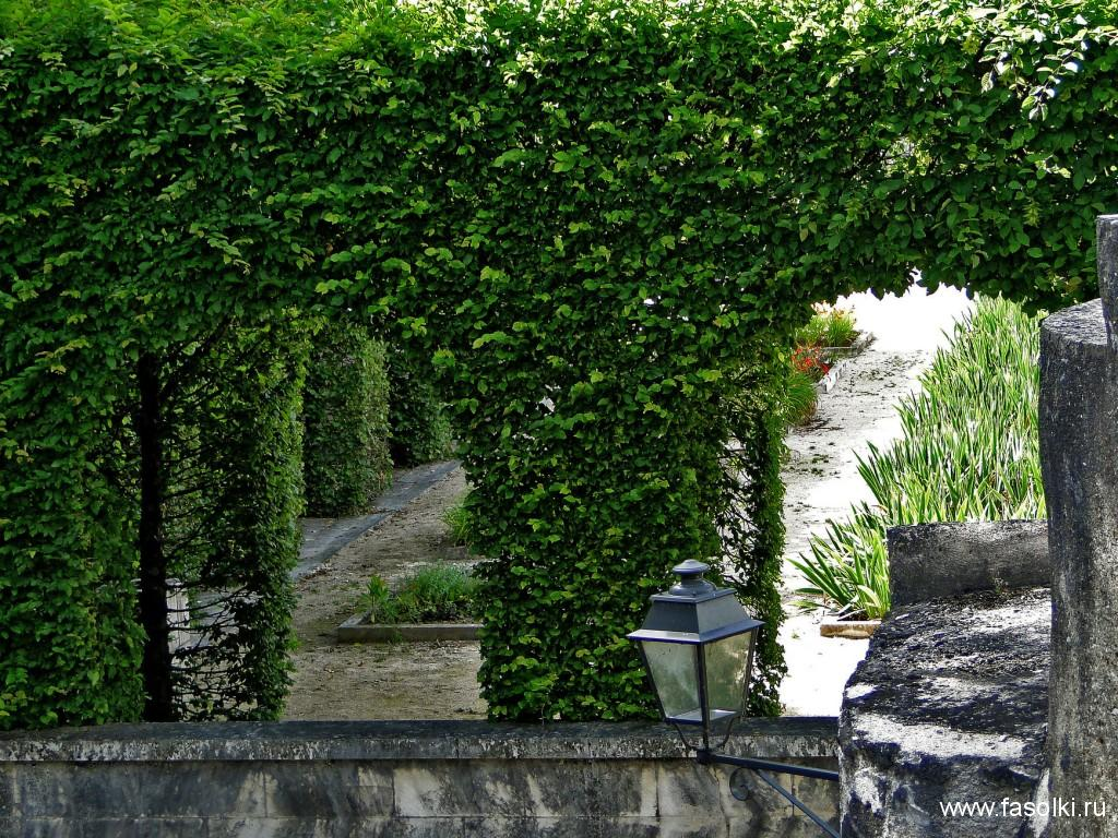 Королевский сад Блуа